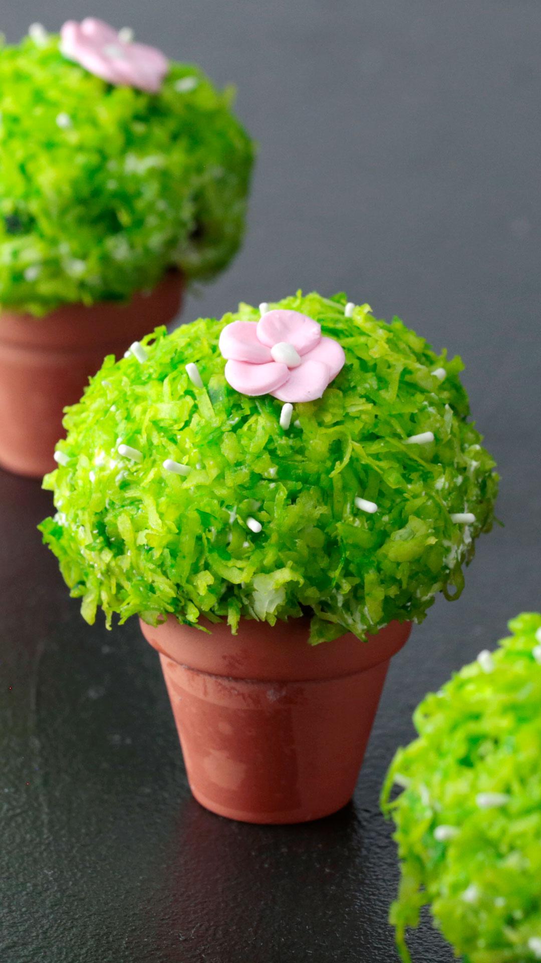 Cactus Snowballs